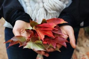 Tips for Covid19 anxiety during lock-down to help mental health include autumn leaves for mindfulness